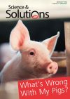 Special-Issue-swine-1